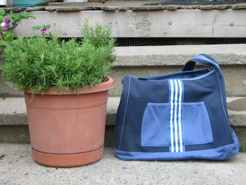 Same totebag, different rosemary. My rosemary. Okay, it's been near death a couple of times, but it's pulled through, and never has it looked so lush. Or so puny.