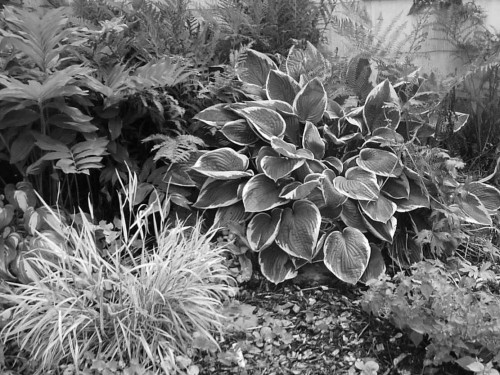 greyscale image illustrating foliage texture